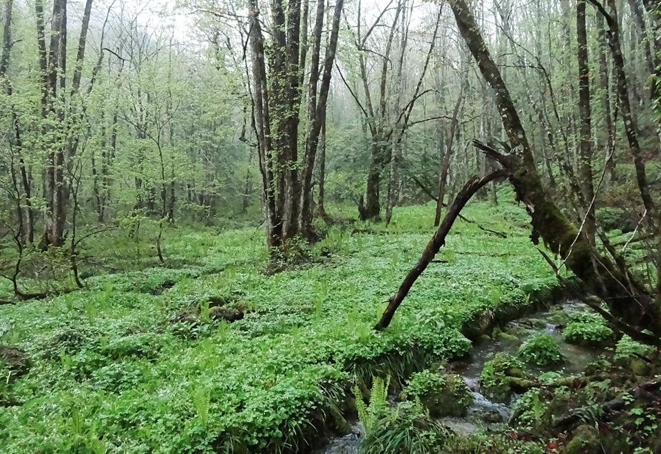 原生林が広がるエリアは癒しの場です