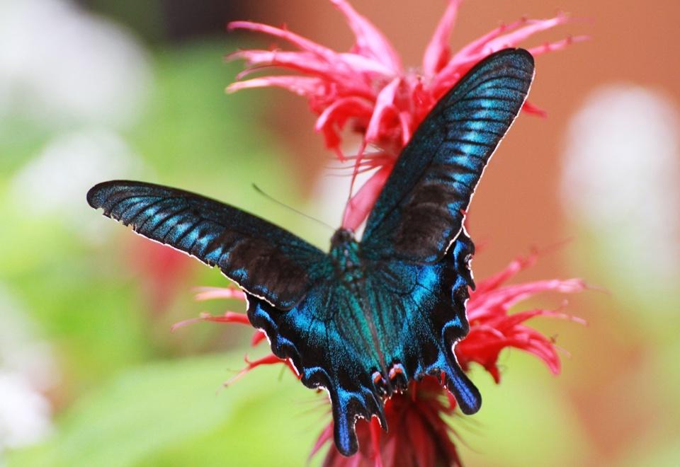 四季折々、様々な花や虫が楽しめます